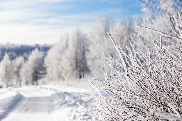 Branches blanches enneigées de l'arbre sur fond de forêt d'hiver