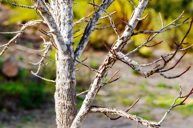 Branches bouchent l'arrière-plan