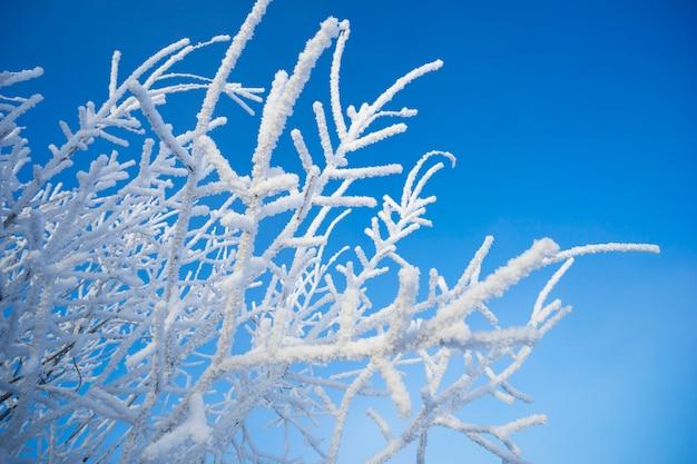 Branches de bouleau dans la décoration de neige.