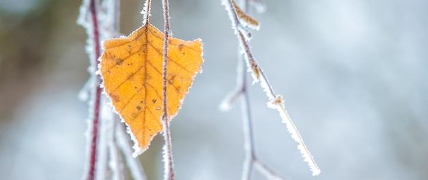 Branches de bouleau minces couvertes de gel et de feuilles sèches sur fond flou_