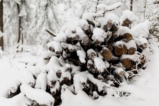 Branches de carburant dans la forêt d'hiver