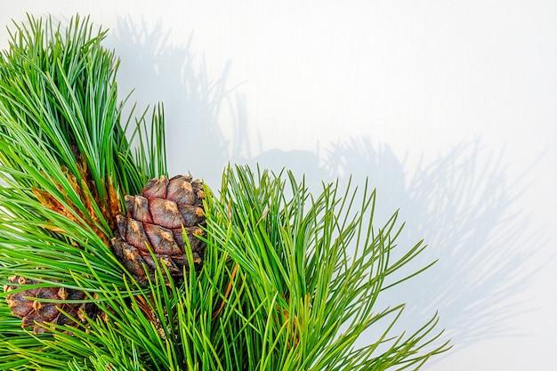 Branches de cèdre à feuilles persistantes naturelles avec des cônes