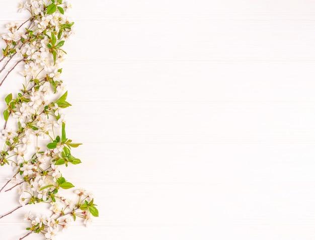 Branches de cerisier en fleurs sur blanc