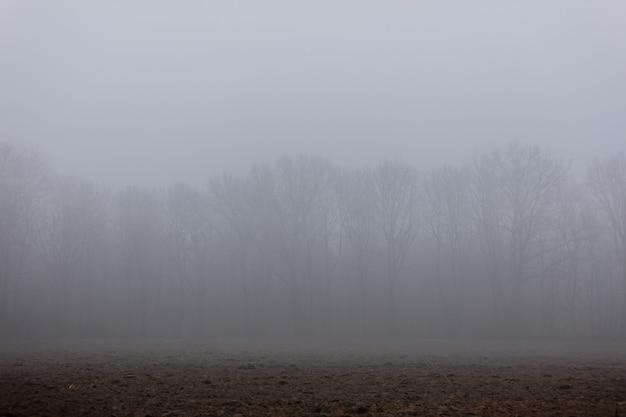 Branches de chêne dans un brouillard en hiver