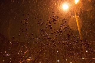 Branches chutes de neige