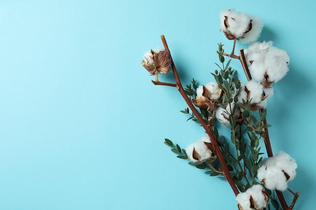Branches de coton sur bleu