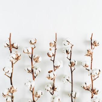 Branches de coton brut minimes sur fond blanc. mise à plat, vue de dessus