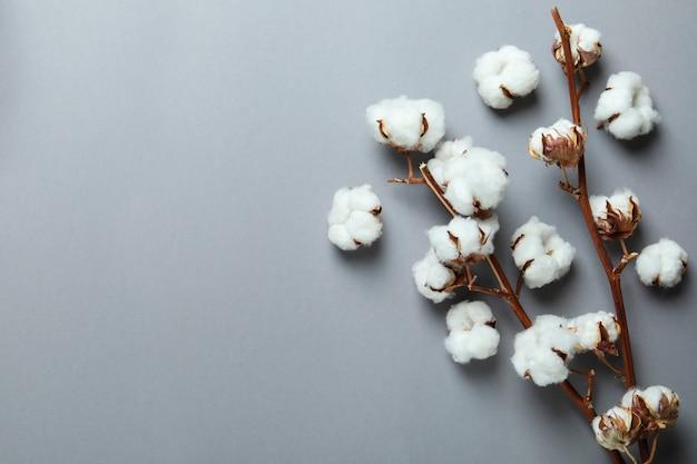 Branches de coton sur gris