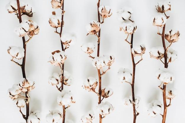 Branches de coton isolés sur blanc