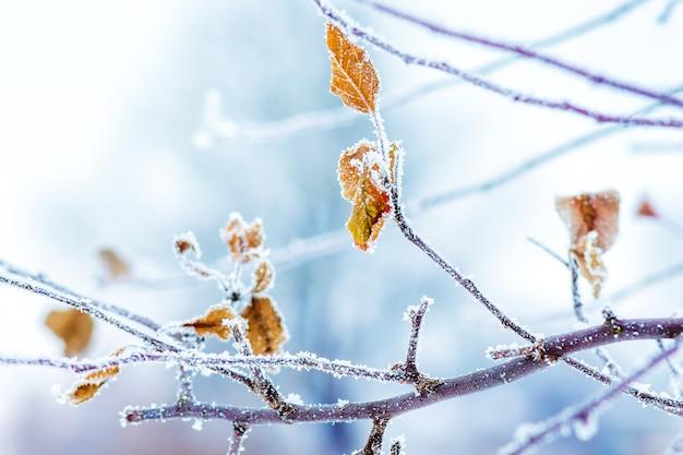 Branches couvertes de givre et feuilles sèches d'un arbre_