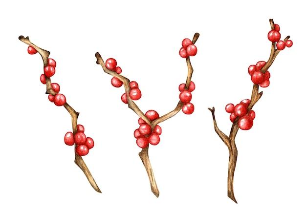 Branches décoratives de noël avec des baies rouges illustration à l'aquarelle du décor de vacances holly ilex