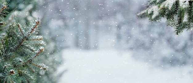 Branches d'épinette couvertes de neige dans la forêt d'hiver sur un arrière-plan flou lors d'une chute de neige
