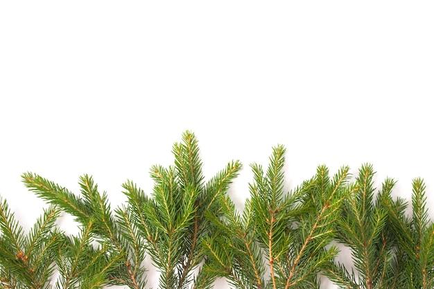 Branches d'épinette sur fond blanc, espace de copie vue de dessus