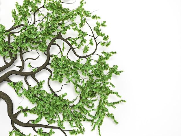 Branches étranges avec des feuilles sur fond blanc. illustration 3d