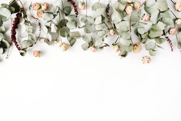 Branches d'eucalyptus et boutons de roses roses sur fond blanc.