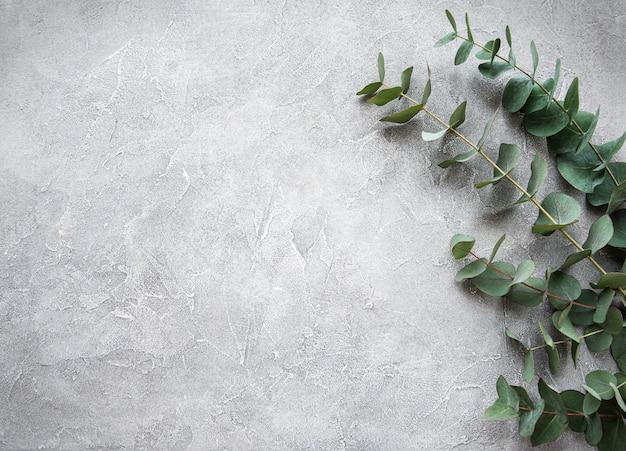 Branches d'eucalyptus sur un fond de béton
