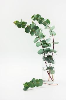 Branches d'eucalyptus en verre avec de l'eau sur fond blanc