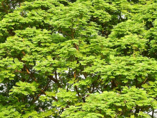 Branches de feuilles d'arbres dans le parc