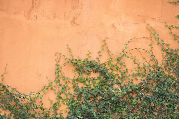 Branches de feuilles vertes sur fond rose et espace pour le cadre.