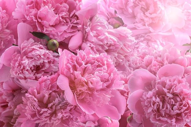 Branches fleuries avec des fleurs et des bourgeons de pivoine. détendez-vous affiche florale ou papier peint. arrière-plan flou