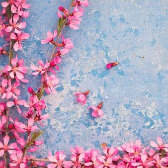 Branches fleuries de printemps, fleurs roses sur fond bleu