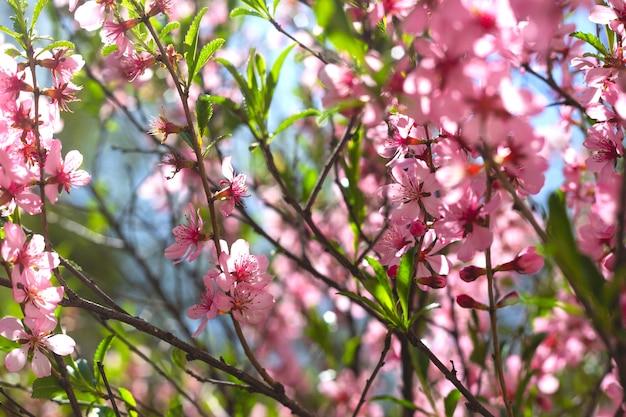 Branches fleuries roses à feuilles vertes