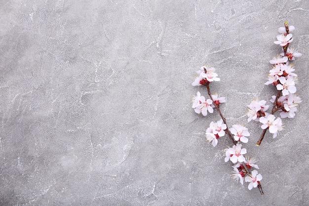 Branches fleurissant au printemps sur un fond de béton gris.