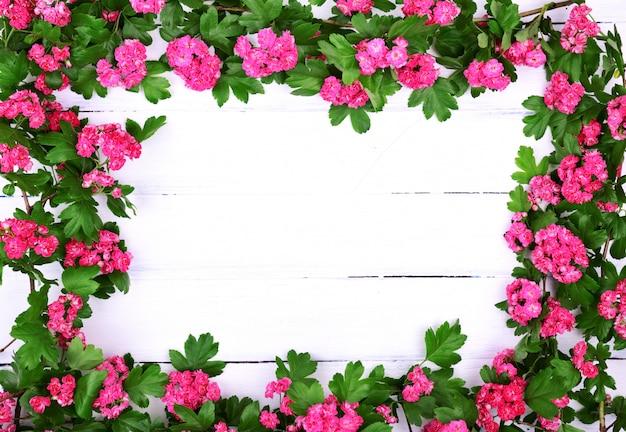 Branches avec des fleurs d'aubépine rose