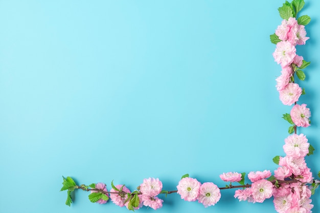 Branches de fleurs de cerisier rose de printemps sur fond bleu. mise à plat. vue de dessus. mise en page de vacances ou de mariage avec espace de copie