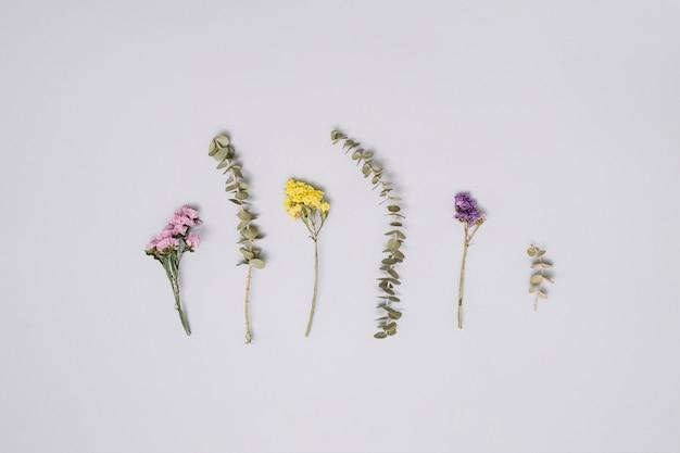 Branches de fleurs différentes sur une table blanche