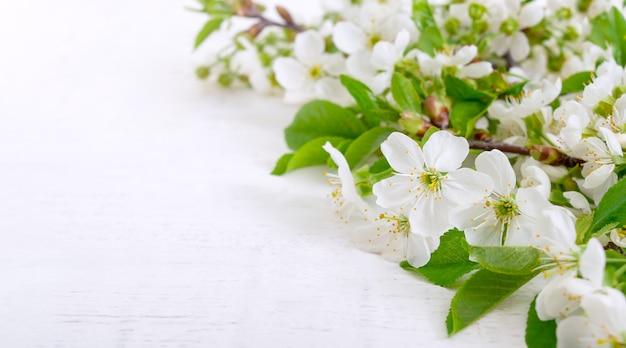Branches en fleurs avec de jeunes feuilles sur un fond en bois blanc, avec espace de copie. fond de printemps