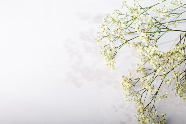 Branches avec des fleurs séchées blanches sur fond blanc