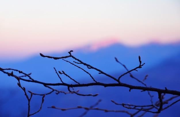 Branches sur fond de ciel coucher de soleil dans les montagnes.