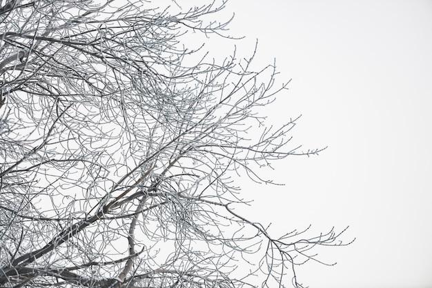 Branches gelées sur ciel blanc