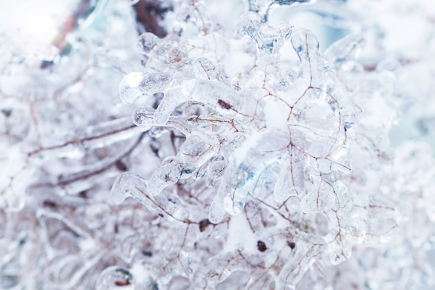 Branches gelées dans la glace