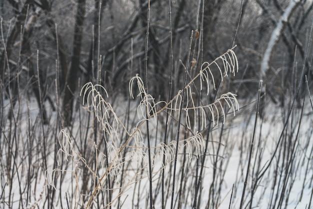 Branches gelées dans un parc.
