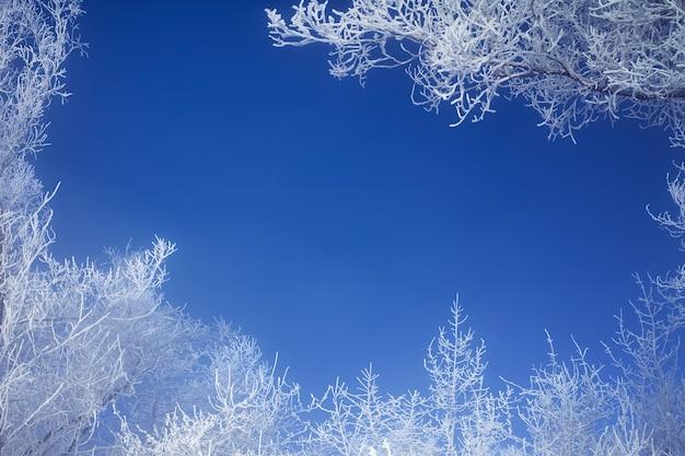 Branches givrées des arbres d'hiver contre le ciel bleu. les branches forment un cadre photo