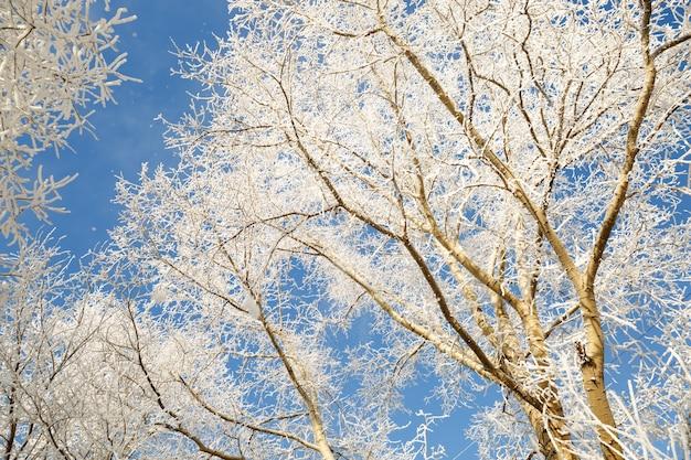Branches d'un grand arbre couvert de givre en journée d'hiver