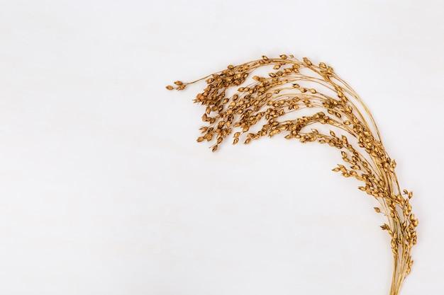 Branches d'herbier créatif de panic raide