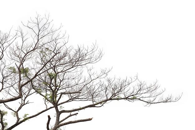 Branches isolés sur fond blanc. tracé de détourage.