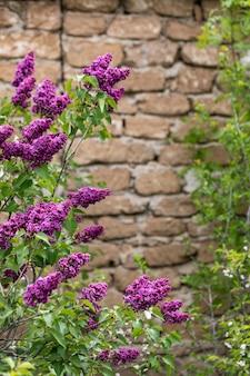 Branches lilas contre un mur de pierre de brique. copie espace
