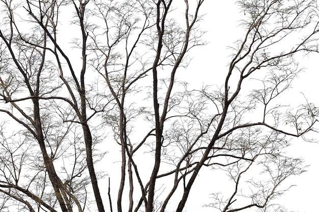 Branches mortes, arbre mort silhouette ou arbre sec sur blanc avec un tracé de détourage.