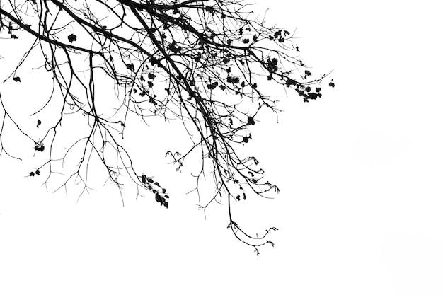 Branches mortes, arbre mort silhouette ou arbre sec sur fond blanc avec un tracé de détourage.