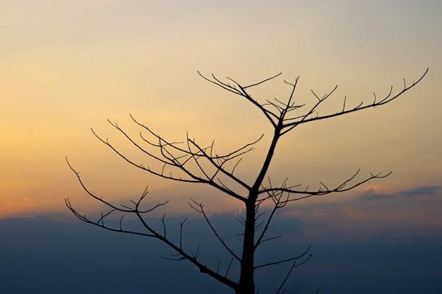 Branches noires et coucher de soleil, ciel orange