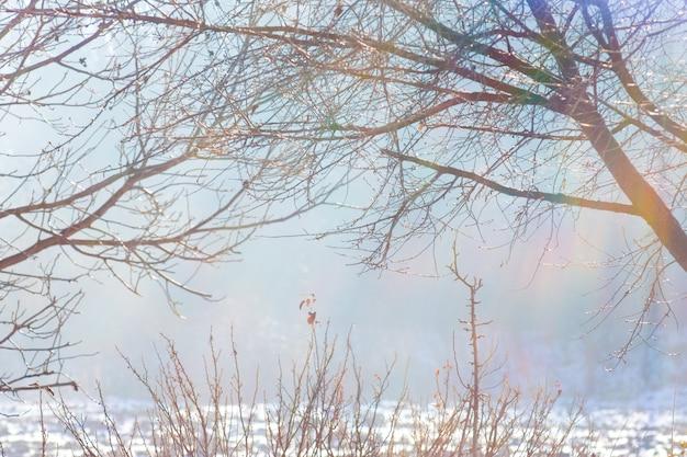 Branches nues d'arbre