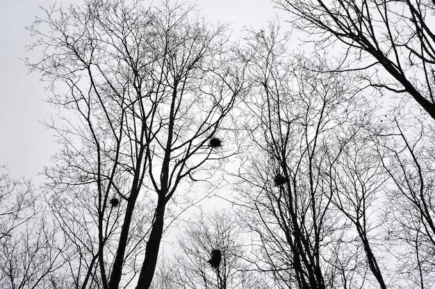 Branches nues d'arbres et nids de tourelles