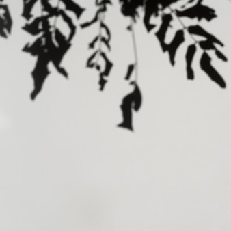Branches d'ombres sur un fond gris pâle