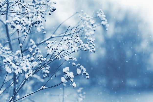 Branches de plantes couvertes de neige dans la forêt lors d'une chute de neige