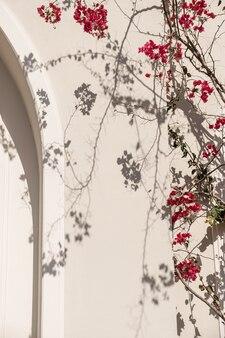 Branches de plantes à fleurs rouges et ombre du soleil sur un mur beige neutre.