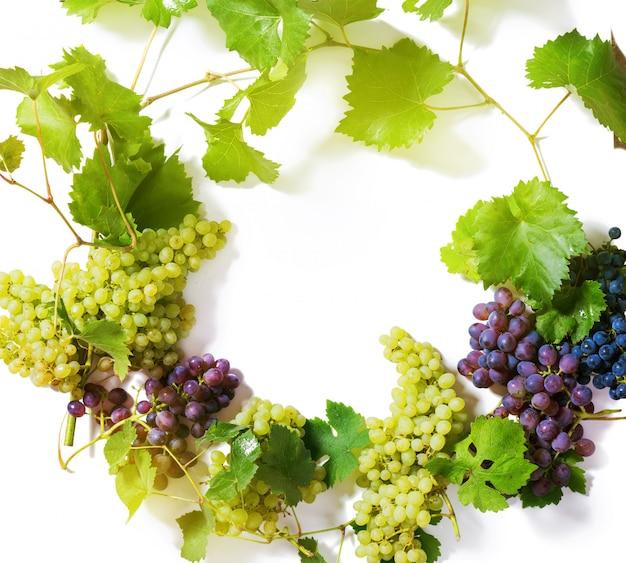 Branches de raisins verts et bleus isolés sur blanc